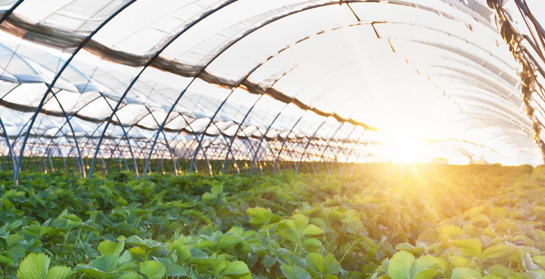 عملکرد نور در گلخانه