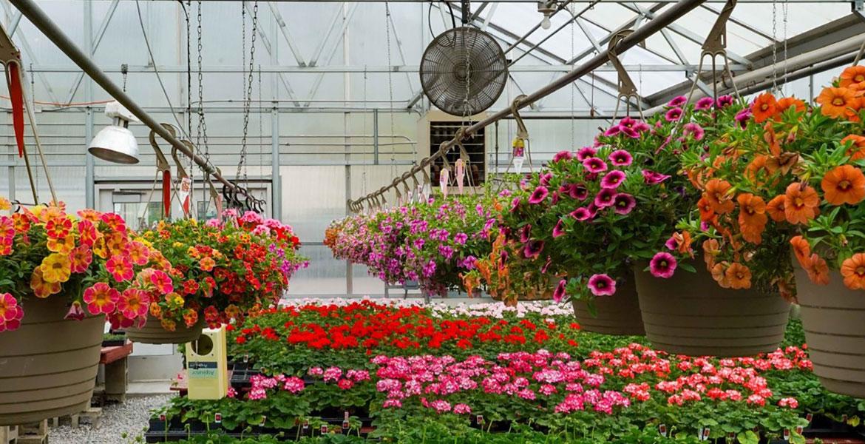 بسترهای کشت گیاهان گلخانه ای